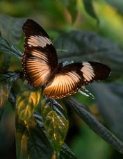 20200825_Papillons_039b_MAX.jpg