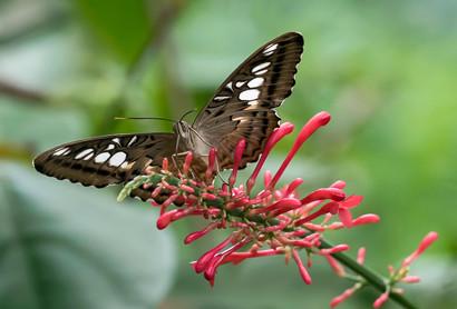 20200825_Papillons_081b_MAX.jpg
