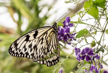 20200825_Papillons_142b_MAX.jpg