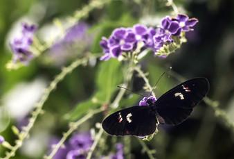 20200825_Papillons_019b_MAX.jpg