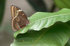 20200825_Papillons_091b_MAX.jpg