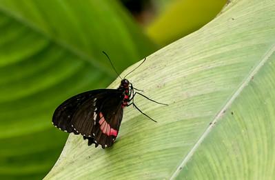 20200825_Papillons_048b_MAX.jpg