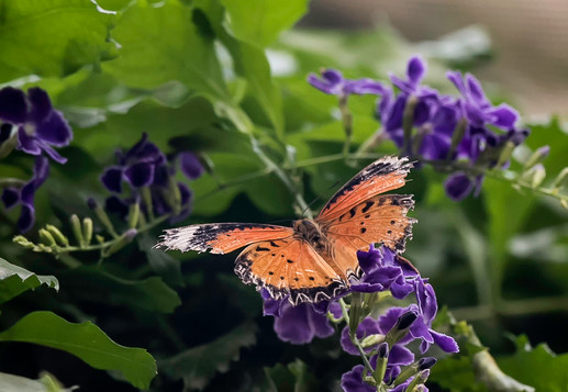 20200825_Papillons_017b_MAX.jpg