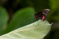 20200825_Papillons_008b_MAX.jpg