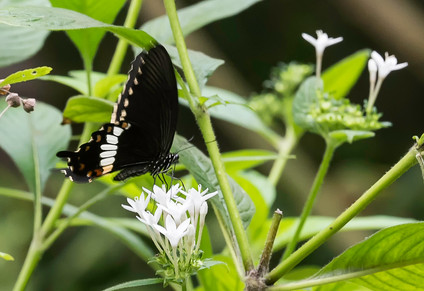 20200825_Papillons_042b_MAX.jpg