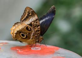 20200825_Papillons_035b_MAX.jpg