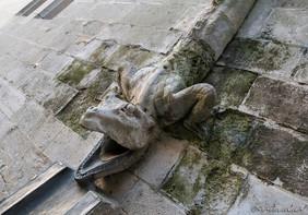 Gouttière en forme de salamandre