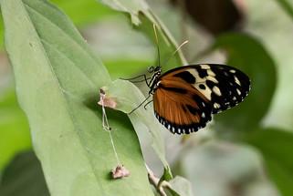 20200825_Papillons_043b_MAX.jpg