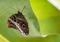 20200825_Papillons_040b_MAX.jpg