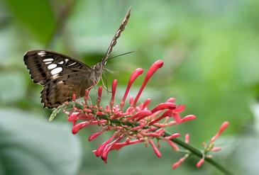 20200825_Papillons_086b_MAX.jpg