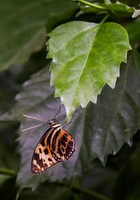 20200825_Papillons_047b_MAX.jpg