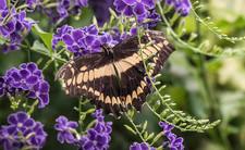 20200825_Papillons_099b_MAX.jpg