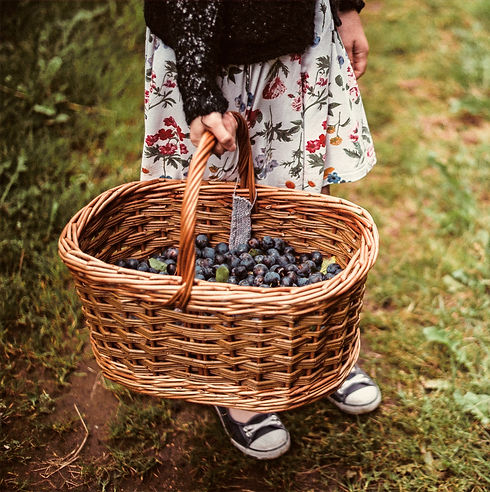 Girl%20with%20Basket%20of%20Berries_edited.jpg
