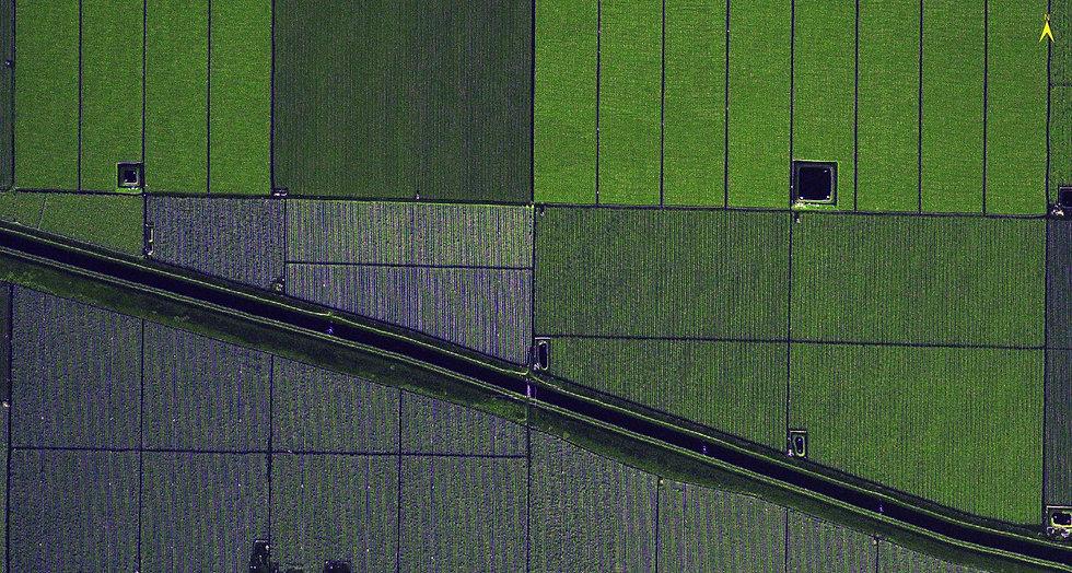cultivos1.jpg