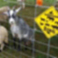 Petting-Zoo-3.jpg