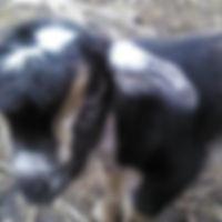 Petting-Zoo-4.jpg