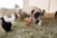 Petting-Zoo-2.jpg