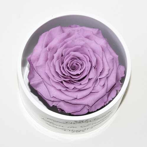 Lilac Rose