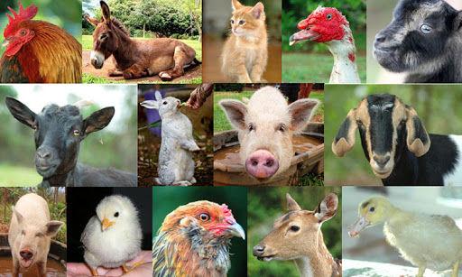 domesticated animals.jpg