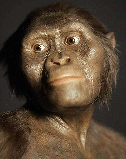 australopithecus 5.jpg