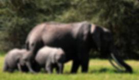 elephant family.jpg