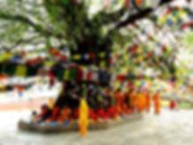 Tree-Worship-1024x768.jpg