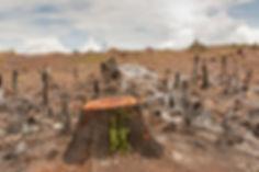 deforestation-670x440.jpg