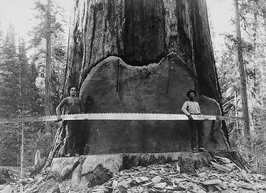 lumberjack-vintage-photos-from-past-20.j