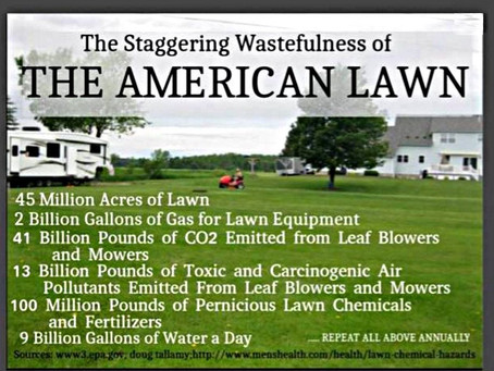 Fighting the Lawn to Save the Earth