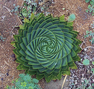 Perfect-Geometric-Patterns-In-Nature8__8
