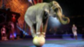 elephant balancing.jpg