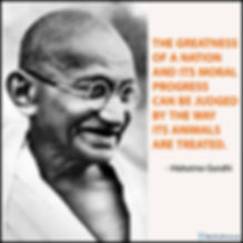 Gandhi-Quote-Animals-WEB1.jpg