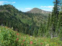 Flowers_TwinLake.jpg