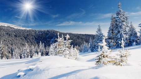 Bright Winter:  7 Signs We're Actually Winning