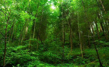 forest-istock-650_650x400_71470321596.jp