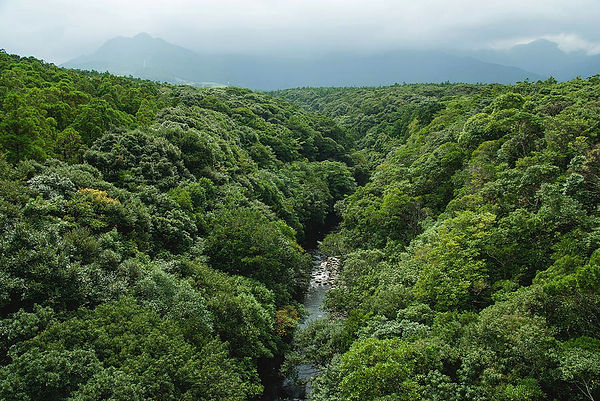river-and-rainforest-from-above-tororo.j