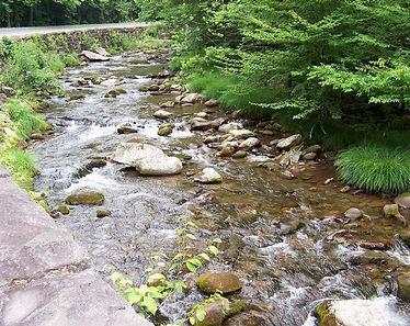wild-stream.jpg