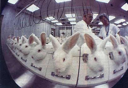 vivisection19.jpg