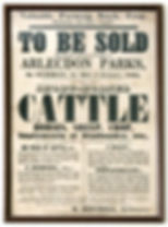 cattle auction poster.jpg