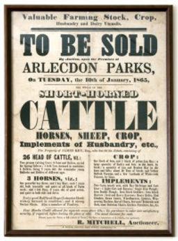 cattle auction poster.jpg
