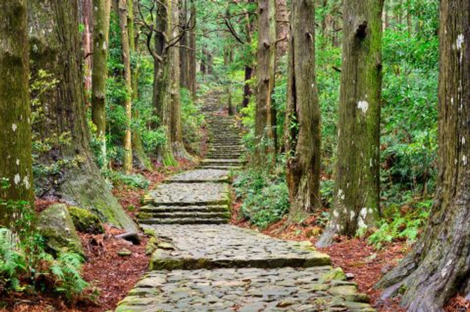 sacred forest walkway.jpg