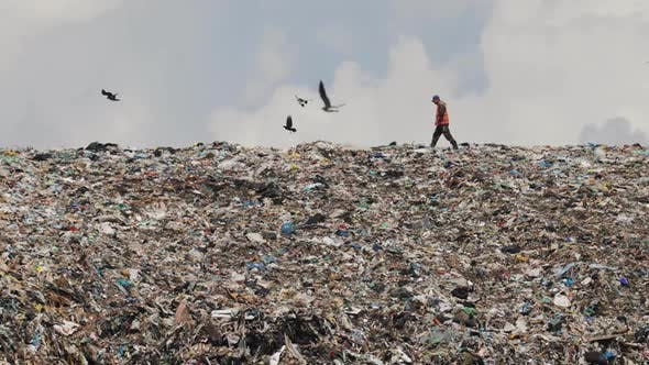 garbage landscape.jpg