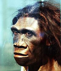 homo erectus.jpg