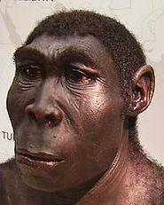 homo erectus 2.JPG