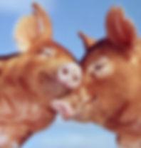 pig-love-photo-u1.jpg