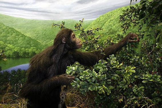 oreopithecus.jpg