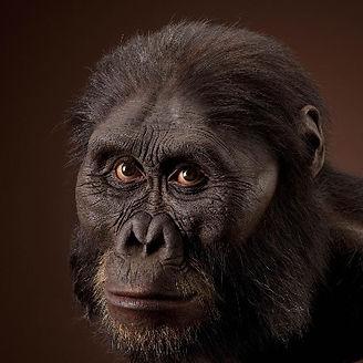 australopithecus 2 (small).jpg