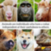 animals-are-individuals-2-crop.jpg