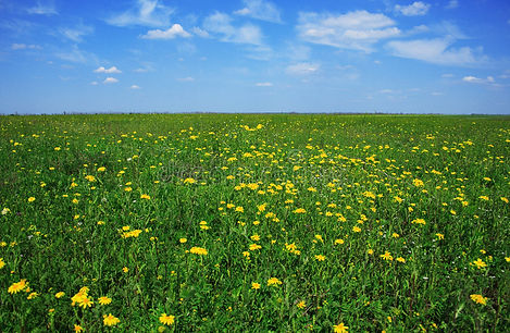 beautiful-meadow-full-flowers-5450845.jp
