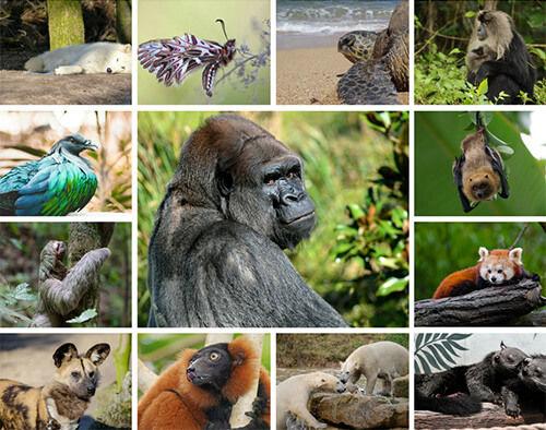 Med-size-Endangered-Animals-Collage.jpg